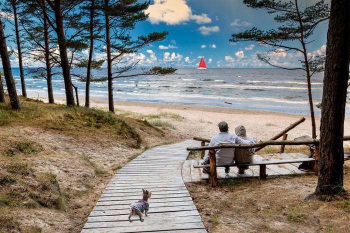 Ostseestrand ist Hundeland. (Foto: shutterstock - Sergei25)